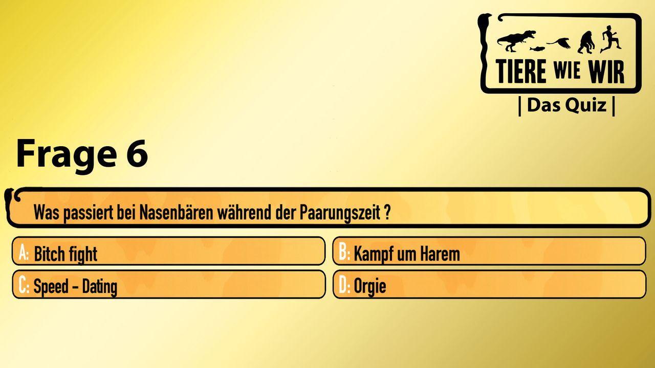 6_Frage_Nasenbär
