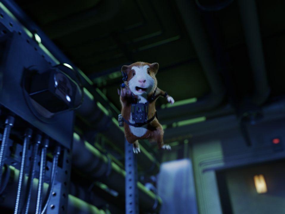 Gemeinsam mit seinem Meerschweinchen-Kollegen soll Darwin den superreichen Schurken Leonard Saber zur Strecke bringen, der mit einem grotesken Vorha... - Bildquelle: Robert Zuckerman Disney Enterprises, Inc. and Jerry Bruckheimer Inc.  All Rights Reserved