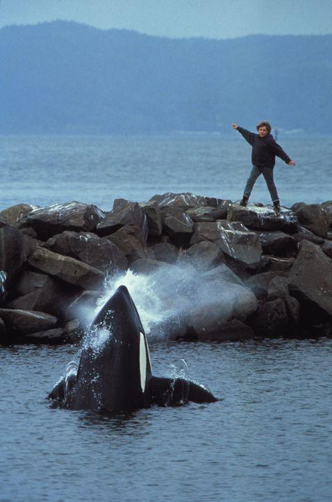 Der kleine Jesse (Jason James Richter) hat nur einen Wunsch für den Killerwal: Freiheit! - Bildquelle: Warner Bros.