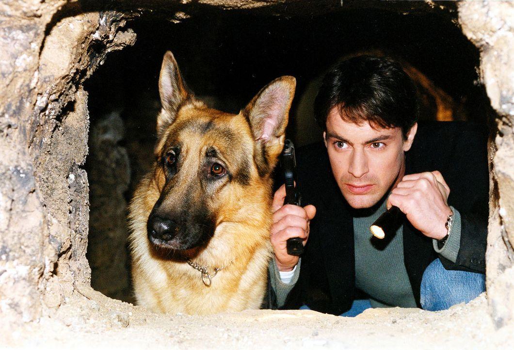 Rex und Kommissar Brandtner (Gedeon Burkhard) machen sich in den Katakomben von Wien auf die Suche nach dem berüchtigten Bankräuber Hanusch. - Bildquelle: Sat.1