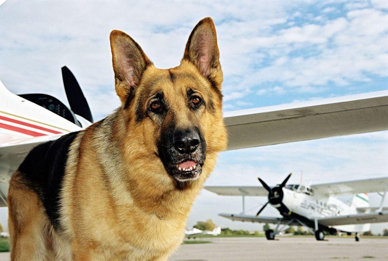 Rex versucht, einen Mord auf dem Privatflughafen zu verhindern. - Bildquelle: Sat.1