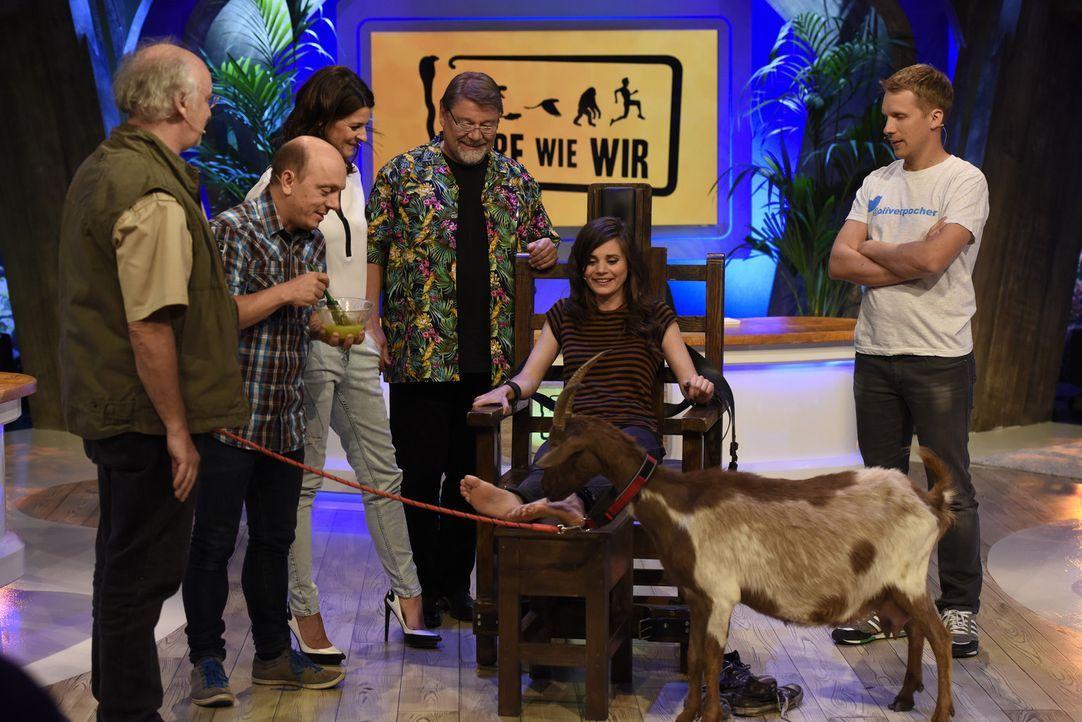 """In der Show """"Tiere wie wir"""" sorgen Dr. Wolf (l.) und Jürgen von der Lippe (3.v.r.) dafür, dass ihre Gäste Bernhard Hoecker (2.v.l.), Marlene Lufen (... - Bildquelle: Martin Rottenkolber SAT.1"""