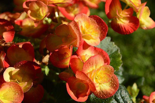 160513_Sommerpflanze_Bildergalerie_b9_Pixabay - Bildquelle: Pixabay
