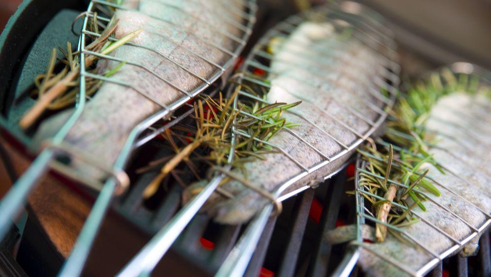 Fisch Gasgrill : Forelle grillen: tipps für gelungenen fisch sat.1 ratgeber