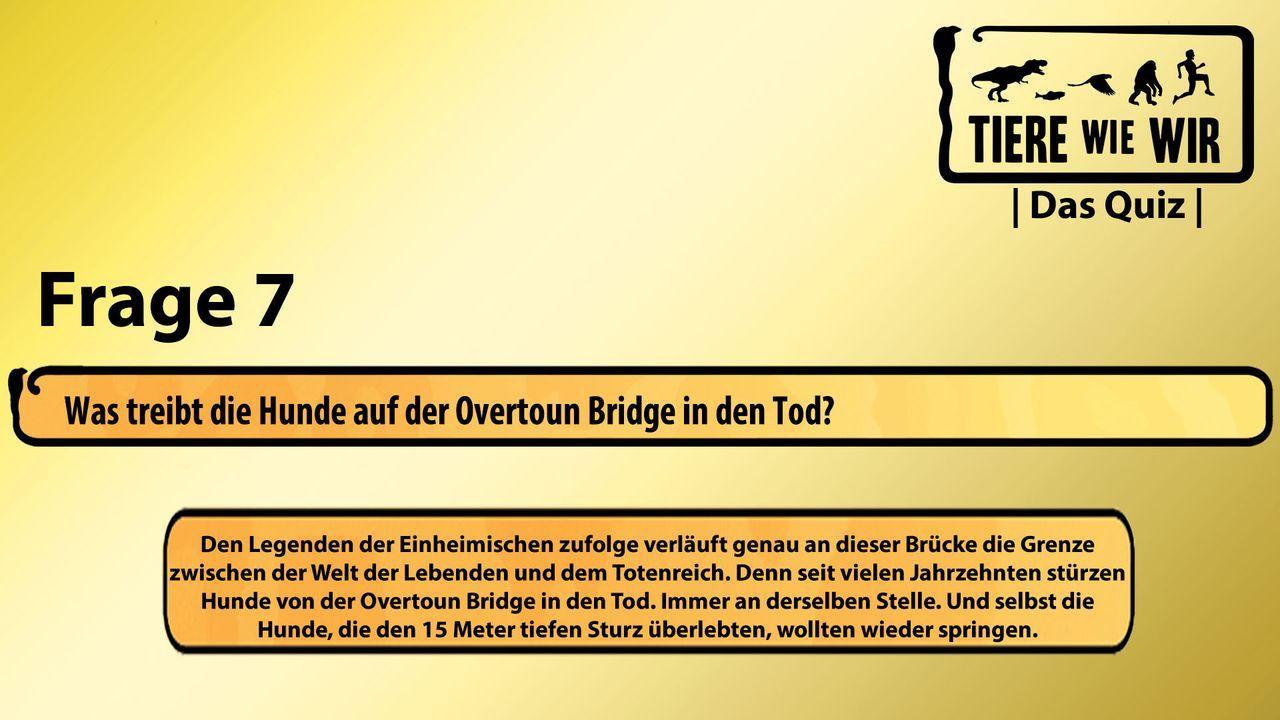 7_Frage_Brücke