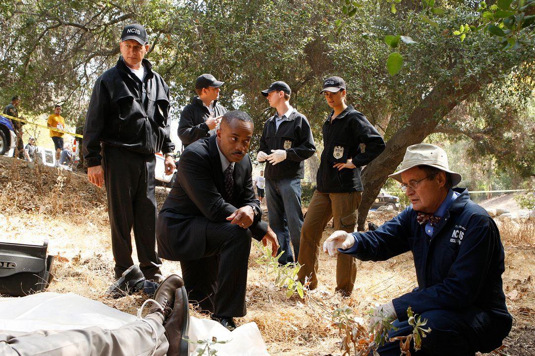 Die Leiche eines Arztes wird auf Navy-Gelände gefunden. Gibbs (Mark Harmon, l.) und sein Team (Michael Weatherly, 2.v.l., Sean Murray, 2.v.r., Cote... - Bildquelle: CBS Television