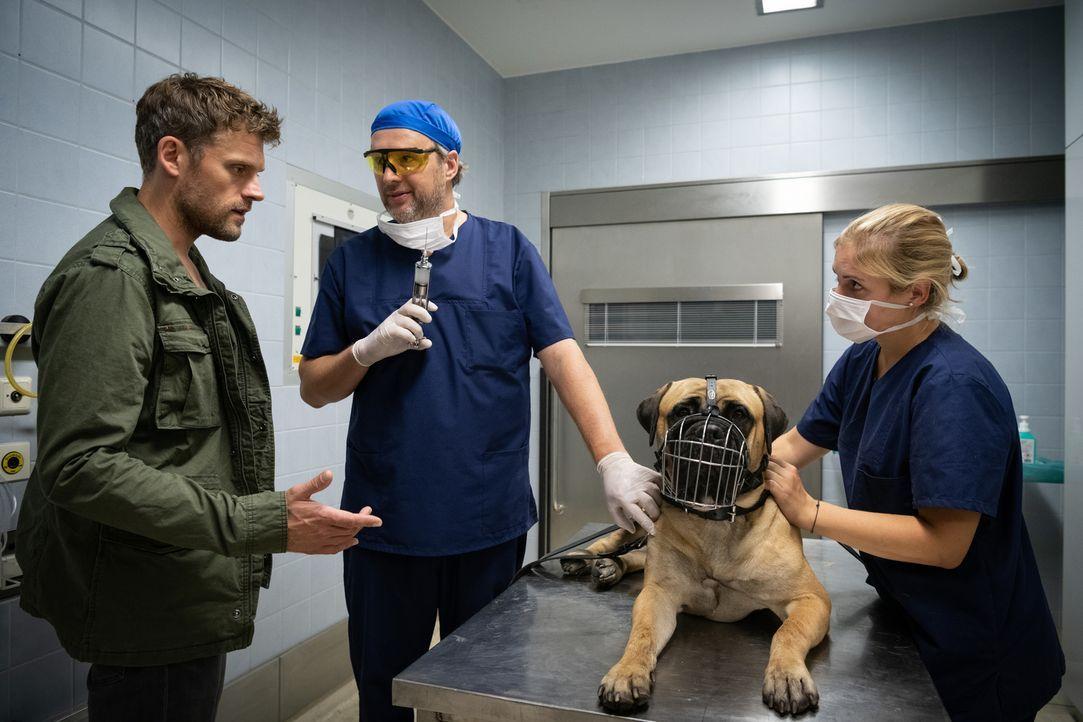 (v.l.n.r.) Elias Decker (Jens Atzorn); Tierarzt (Stephan Grossmann); Rocky - Bildquelle: Christoph Assmann SAT.1/Christoph Assmann