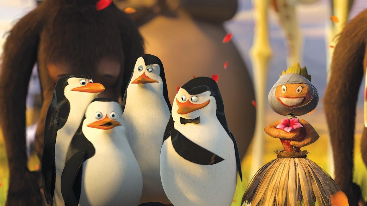 Alex, Marty, Gloria und Melman wollen nach Amerika zurück. Auch die vier Pinguine sind wieder mit von der Partie ... - Bildquelle: (2008) DREAMWORKS ANIMATION LLC. ALL RIGHTS RESERVED.