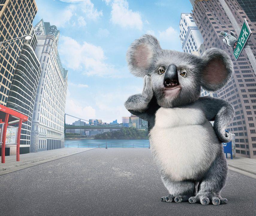 Geht mit seinen Freunden aus dem New Yorker Zoo auf große Reise: Koala Nigel ... - Bildquelle: Disney Enterprises, Inc.  All rights reserved