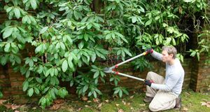 Fabulous Rhododendron schneiden – mit dieser Anleitung | SAT.1 Ratgeber CY48