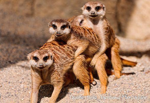 Die 10 lustigsten tiere der welt