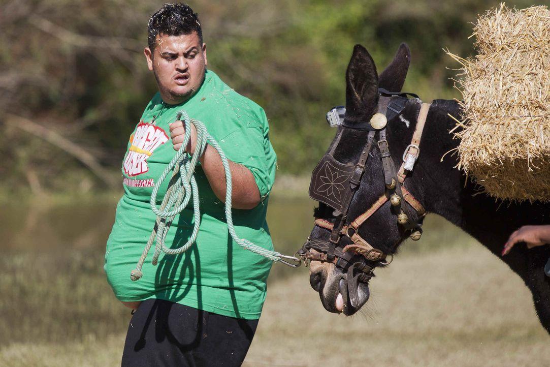"""Bei """"The Biggest Loser"""" sagen 24 übergewichtige Teilnehmer den Kilos den Kampf an. Mit Hilfe der Trainer kämpfen sie um neues Lebensgefühl ... - Bildquelle: Enrique Cano SAT.1"""