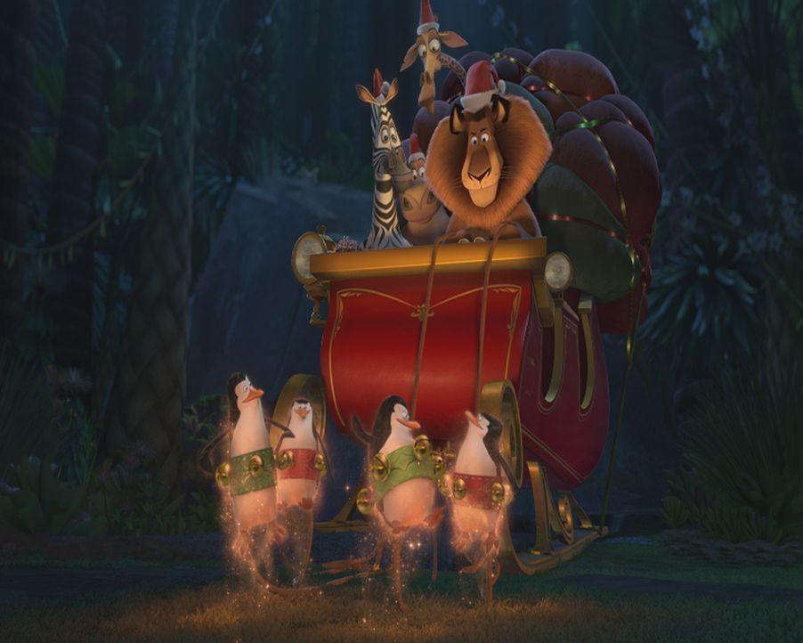 Als der Weihnachtsmann über Madagaskar mit seinem Schlitten abstürzt und sein Gedächtnis verliert, müssen Alex, Marty, Melman und Gloria die Geschen... - Bildquelle: United International Pictures (UIP)