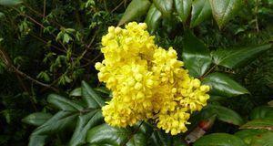 Gartengestaltung_2016_05_10_Stechpalme_Bild 2_fotolia_karo_s