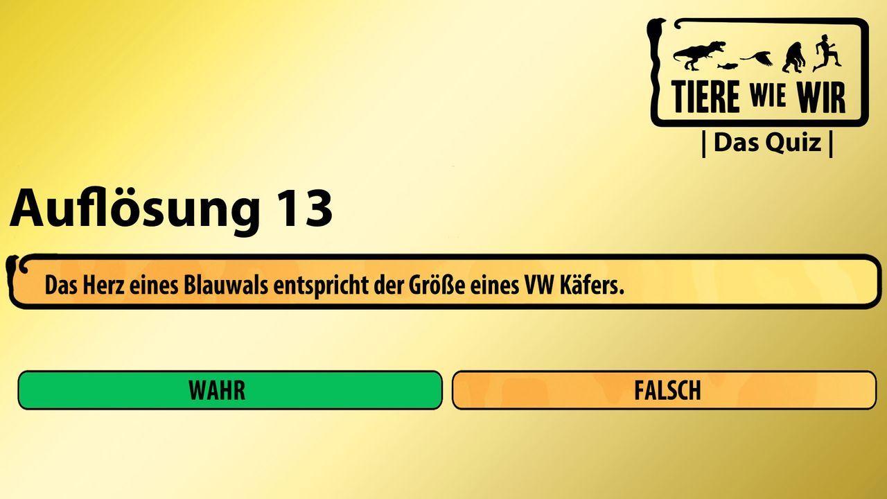 13_Auflösung_WF_Blauwal