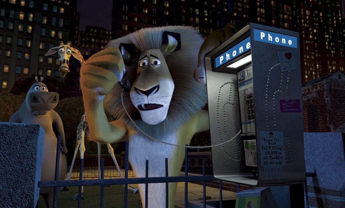 Mitten in der Nacht stellen Alex, Melman und Gloria fest, dass ihr Freund Marty, das Zebra aus dem Zoo verschwunden ist. Sie beschließen, selbst au... - Bildquelle: TM &   2004 DREAMWORKS ANIMATION SKG.