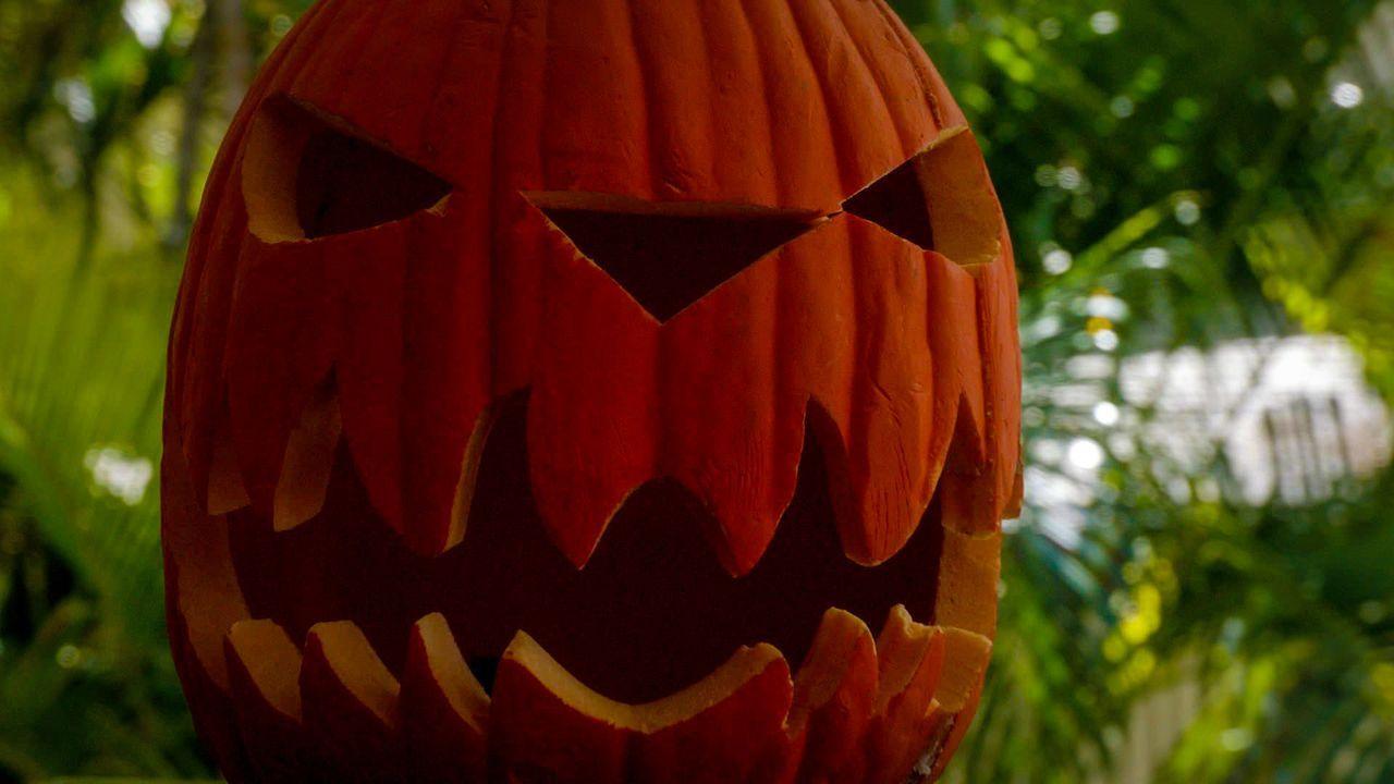 An Halloween nimmt das Team die Jagd auf einen Serienmörder auf, der Morde aus Kultfilmen nachahmt ... - Bildquelle: 2014 CBS Broadcasting Inc. All Rights Reserved.