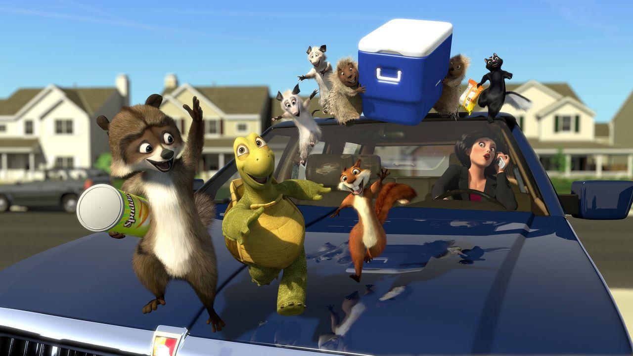 Richie (l.), Verne (2.v.l.), Hammy (3.v.l.) und die anderen Tiere starten ihren Raubzug bei den Menschen ... - Bildquelle: United International Pictures