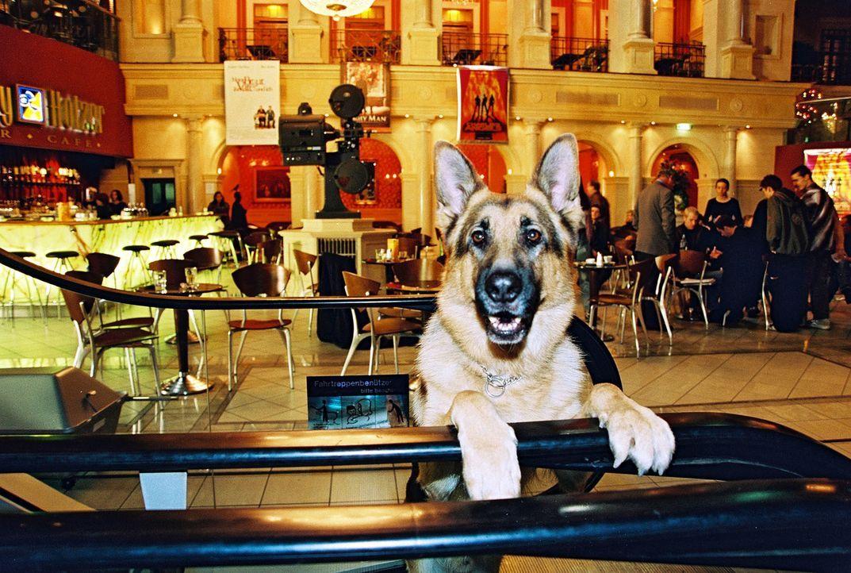 Rex ist dieses Mal im Kinocenter im Dienst. Ein Platzanweiser wurde erschlagen aufgefunden. Findet Rex Spuren des Täters? - Bildquelle: Sat.1