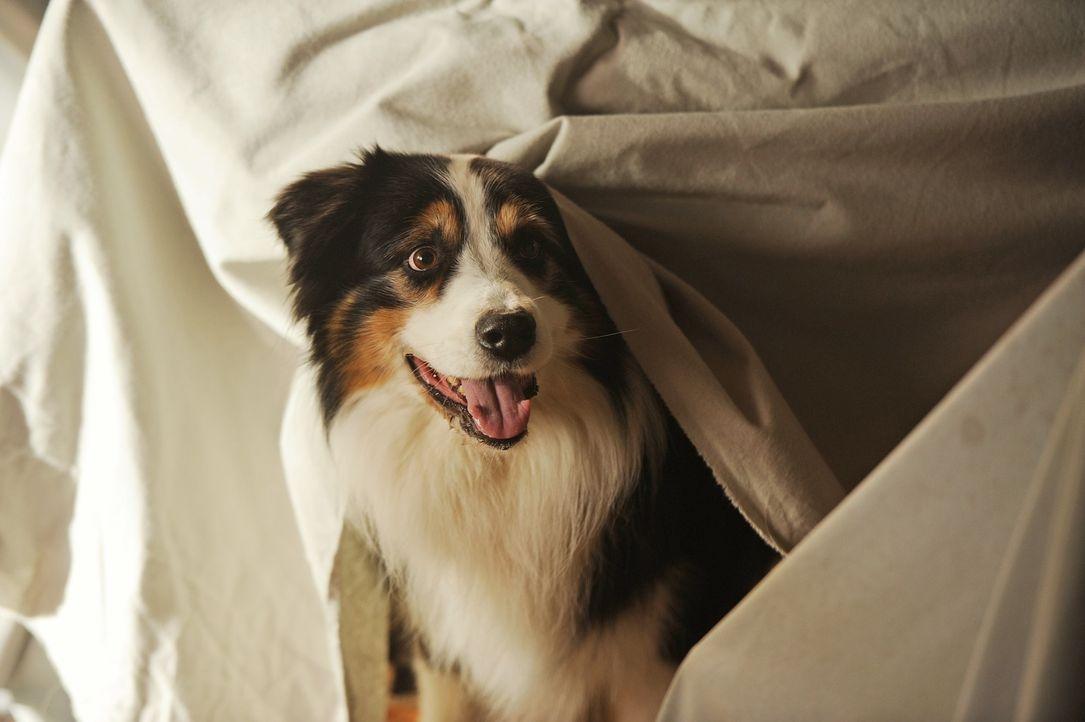 Steht seinen Freunden immer zur Seite: Hund Timmy ... - Bildquelle: 2012 Constantin Film Verleih/ Bernd Spauke