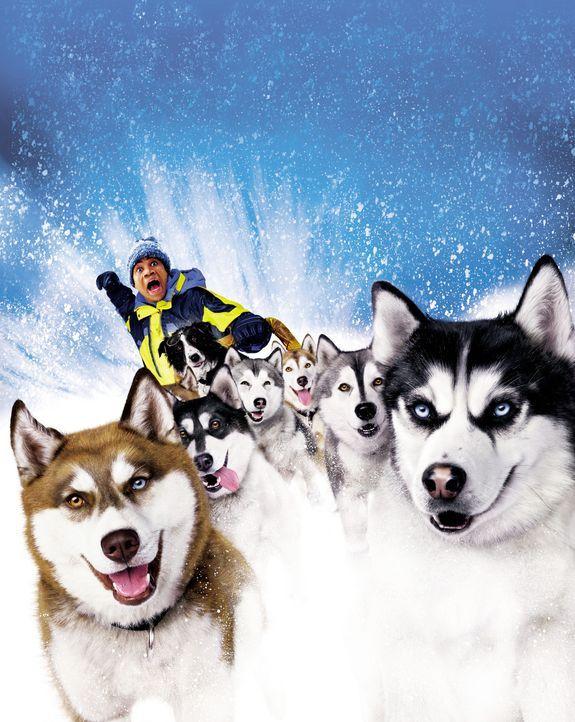 SNOW DOGS - 8 HELDEN AUF 4 PFOTEN - Artwork: Zahnarzt Ted (Cuba Gooding jr.) kriegt die Krise: Er ist ein Adoptivkind, seine wirkliche Mutter lebte... - Bildquelle: Disney Enterprises, Inc.