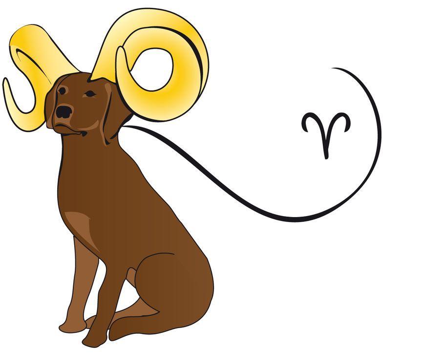 Widderhund Kopie