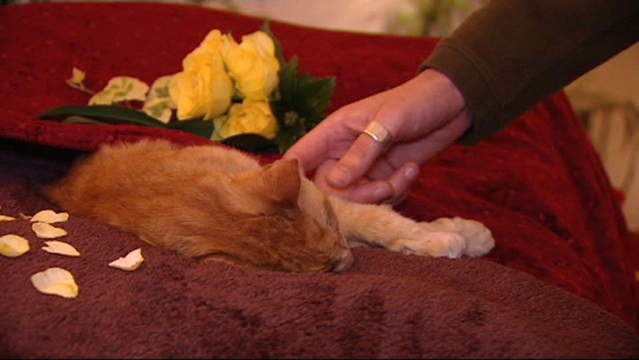 """Ein Labrador mit Bandscheibenvorfall, eine Katze mit Tumor - die Tierärzte in der Notfallrettung müssen die """"Patienten"""" schnellstmöglich medizini... - Bildquelle: SAT.1"""
