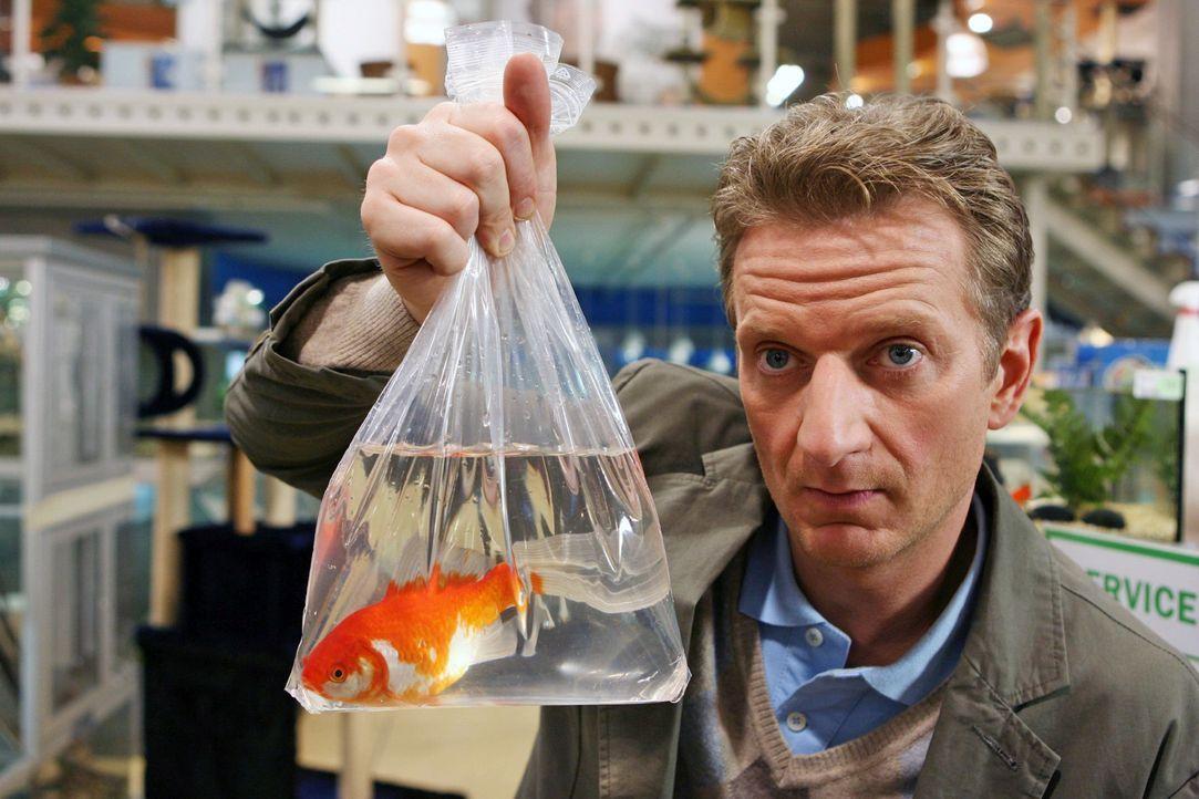"""Er (Michael Kessler) würde den Goldfisch gern zurückgeben, er ist ihm einfach zu """"speziell"""" angezogen ... - Bildquelle: Sat.1"""