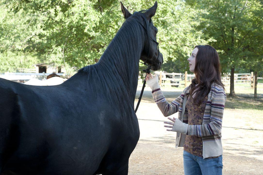 Als Kelly (Kacey Rohl) dem schwarzen Mustang Flicka das erste Mal begegnet, stimmt die Chemie zwischen den Beiden auf Anhieb. Kann sie ihn so weit t... - Bildquelle: 2012 Twentieth Century Fox Film Corporation. All rights reserved.