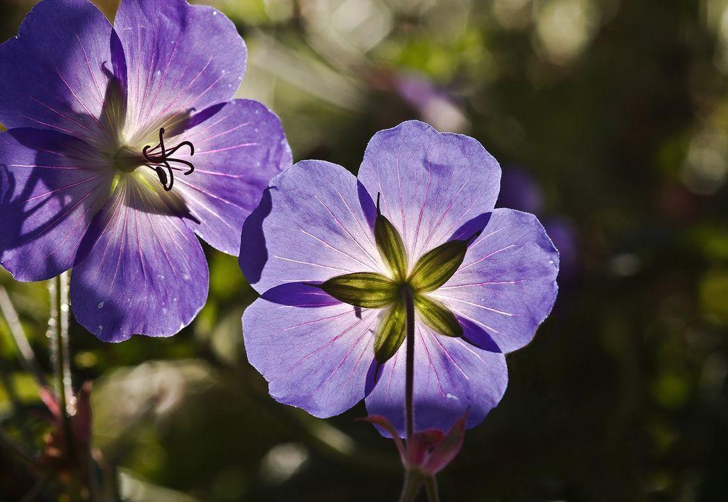1. BlumenDer Klassiker unter den Geschenken:Ein schöner Strauß Blumen....