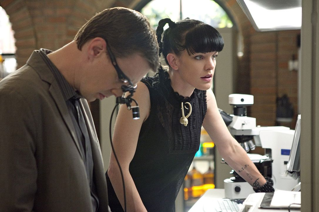 Ein neuer Fall beschäftigt Abby (Pauley Perrette, r.) und McGee (Sean Murray, l.) ... - Bildquelle: CBS Television