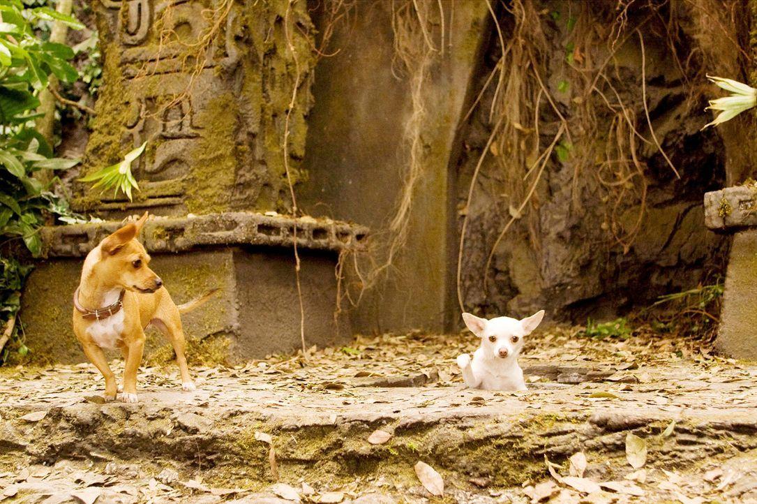 Ein Abenteuer der besonderen Art, wartet auf Chloe (r.) und Papi (l.) ... - Bildquelle: Disney Enterprises, Inc.  All rights reserved