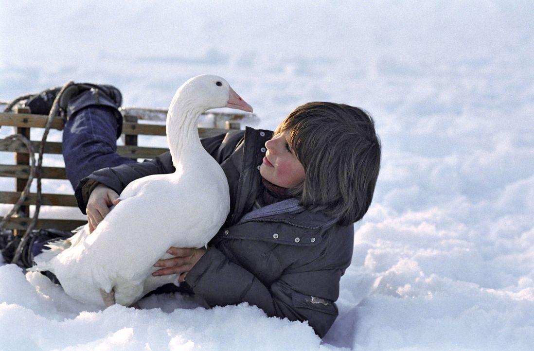 Der zwölfjährige Rudi (Markus Krojer) lebt mit seinen Eltern auf einem Bauernhof. Rudis allerbeste Freundin ist die Gans Henriette, die er von sei... - Bildquelle: Walter Wehner Sat.1