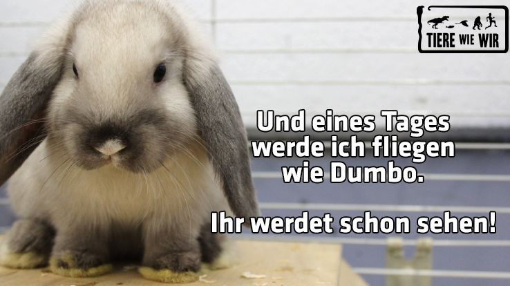 TWW-Tiermeme-Dumbo