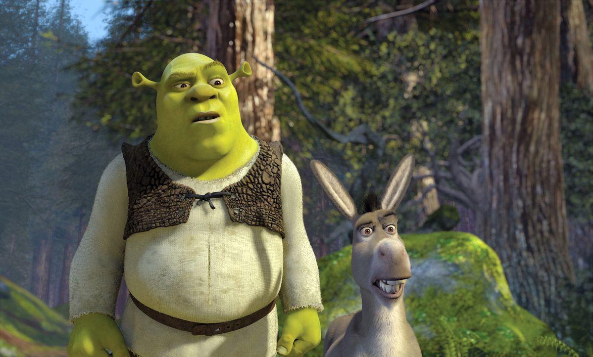 Noch ahnen Shrek, l. und Esel Donkey, r. nicht, dass sie dem König ein gewaltiger Dorn im Auge sind ... - Bildquelle: DreamWorks SKG