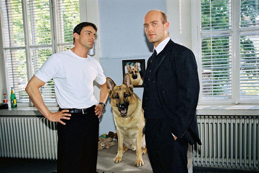 """Günter Krapp (Michael Rast, r.), Beamter der Staatspolizei, entbindet Kommissar Brandtner (Gedeon Burkhard, l.) und Rex kurzerhand von dem Fall """"Po... - Bildquelle: Sat.1"""