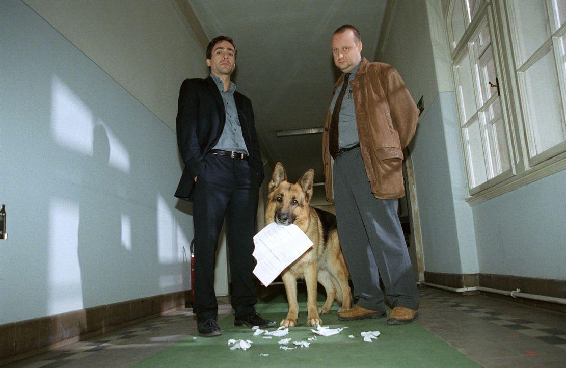 Rex zerreißt vor den Augen seiner Kollegen Hoffmann (Alexander Pschill, l.) und Kunz (Martin Weinek, r.) seinen Suspendierungsbescheid. - Bildquelle: Sat.1