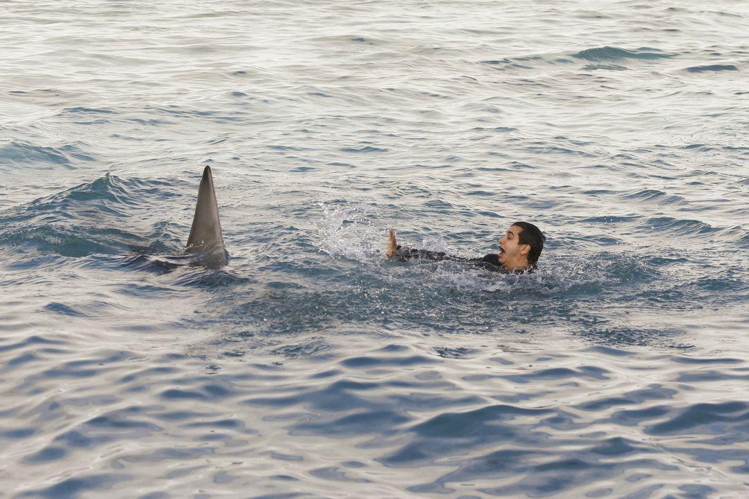 Während Walter (Elyes Gabel) nach einem Bootunglück mitten im Meer auf eine ganze Horde Haie trifft, wird Sylvester mit einigen unangenehmen Fragen... - Bildquelle: Monty Brinton 2016 CBS Broadcasting, Inc. All Rights Reserved.