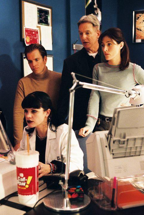 Als eine Witwe einen Anruf von ihrem totgeglaubten Ehemann bekommt, müssen Gibbs (Mark Harmon, 2.v.r.), Tony (Michael Weatherly, l.), Kate (Sasha Al... - Bildquelle: CBS Television