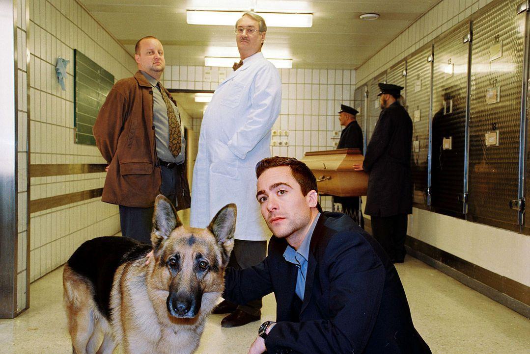 Marc (Alexander Pschill, r.), Kunz (Martin Weinek, l.), Dr. Graf (Gerhard Zemann, M.) und Rex sind in der Gerichtsmedizin. Dort wird ein Verdächtig... - Bildquelle: Sat.1