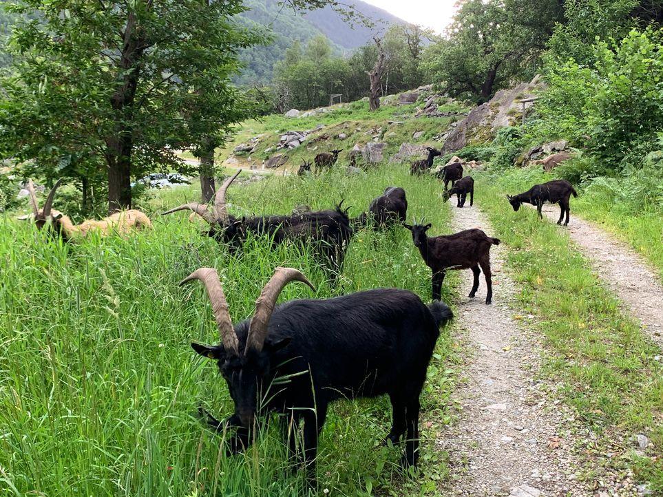 Alto Ticino (14)