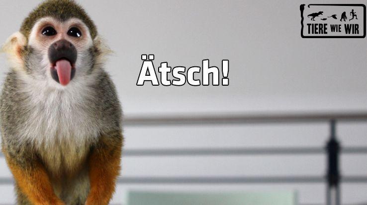TWW-Tiermeme-Aetsch