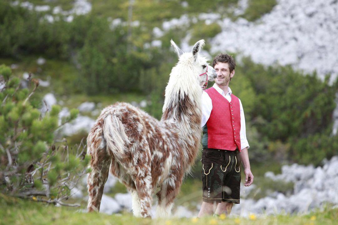 Lama auf Abwegen: Auf der Jagd nach dem Lama erkennt Franzi, dass man seinen Erinnerungen nicht davonlaufen kann, insbesondere wenn sie von einem ke... - Bildquelle: SAT. 1