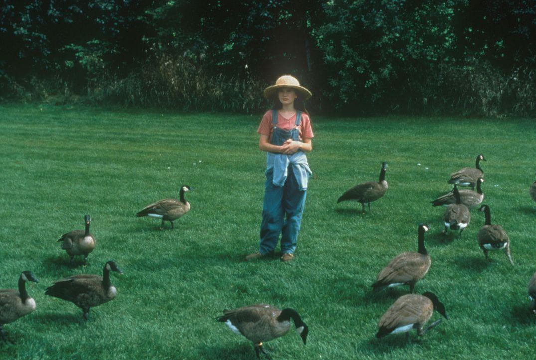 Durch ihre Liebe zu den kleinen Wildgänsen vergisst Amy (Anna Paquin) ihre Ängste und ihre Einsamkeit und findet durch ihren liebevollen Vater ein... - Bildquelle: Columbia Pictures