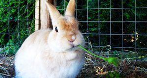 Um den Kaninchenstall winterfest zu machen, sollten Sie an eine dicke Schicht...