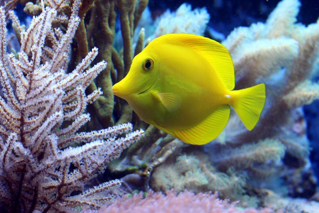 fish-2921430_1920 - Bildquelle: Pixabay