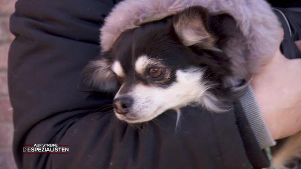 Auf Streife - Die Spezialisten - Auf Streife - Die Spezialisten - Mein Hund, Der Lebensretter