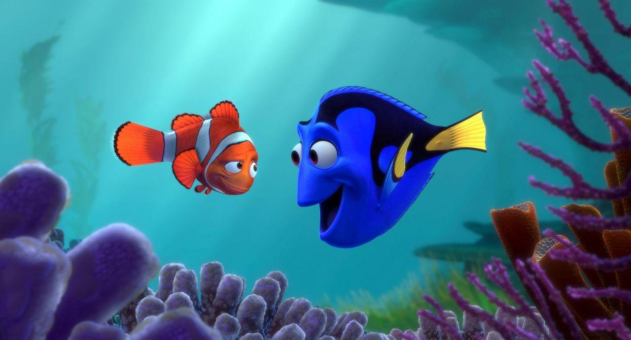 Marlin (l.) macht sich auf die Suche nach seinem Sohn und trifft auf die an Gedächtnisschwund leidenden Fischdame Dorie (r.), die ihn begleiten will... - Bildquelle: Walt Disney Pictures