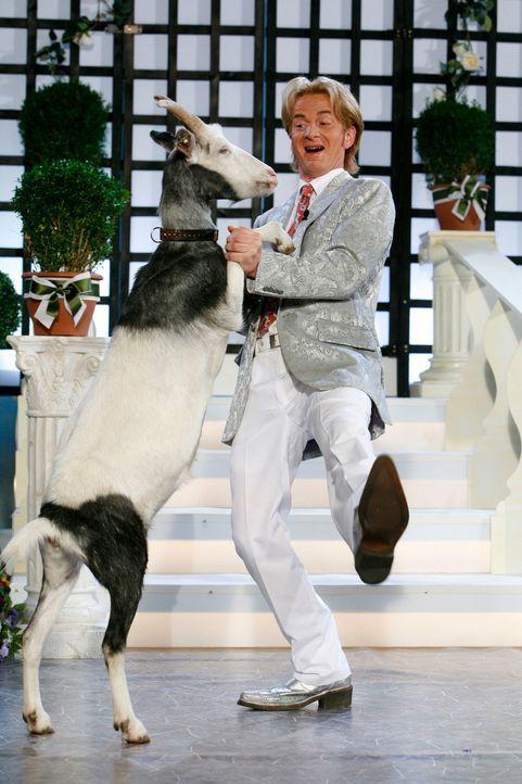 Florian Silbereisen (Michael Kessler) legt mit seiner Ziege eine flotte Sohle aufs Parkett ... - Bildquelle: Kai Schulz ProSieben