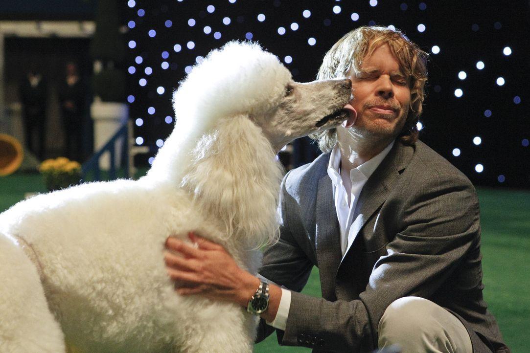 Bei den Ermittlungen in einem neuen Fall, muss Deeks (Eric Christian Olsen) bei einer Hundeshow teilnehmen ... - Bildquelle: CBS Studios Inc. All Rights Reserved.